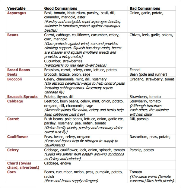 Sample Companion Planting Chart   Documents In Pdf