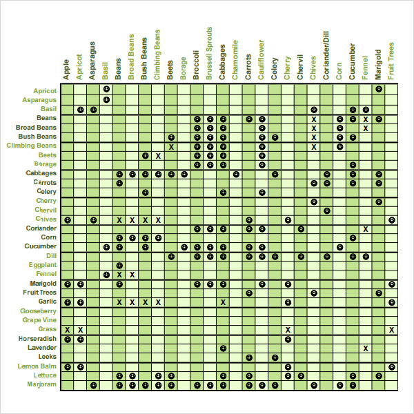 Attractive Companion Planting Chart