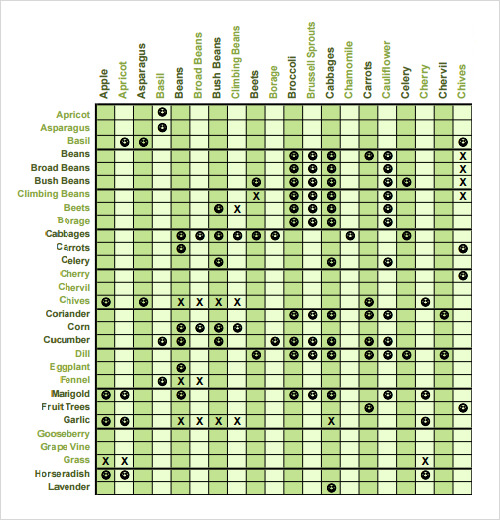 Beautiful Sample Companion Planting Chart Images  Best Resume