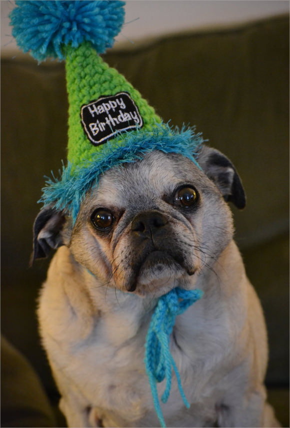 party hat template for dogs