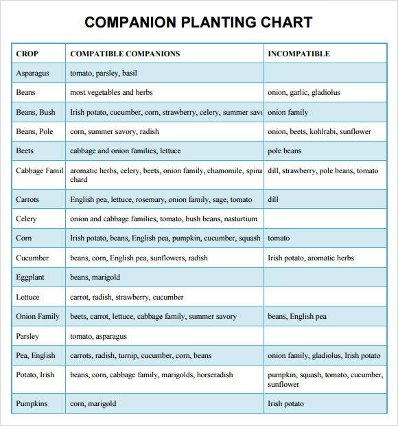 Sample Companion Planting Chart 9 Documents In PDF Word – Sample Companion Planting Chart