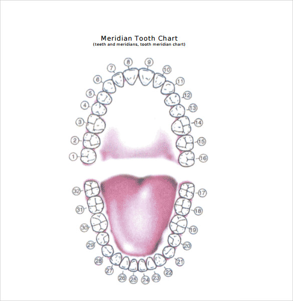 sample teeth chart template