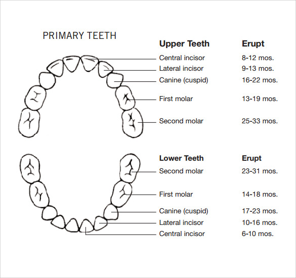 Sample Teeth Chart Template - 10+ Free Documents Download ...