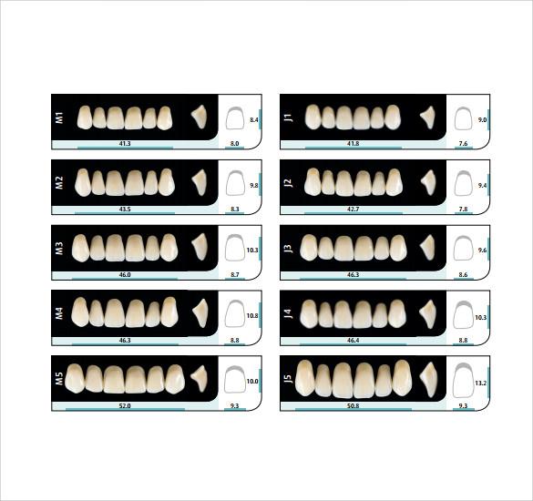 teeth chart for adults