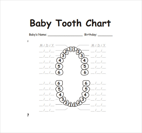 photo relating to Baby Teeth Chart Printable named Pattern Tooth Chart Template - 10+ Free of charge Information Down load within just PDF