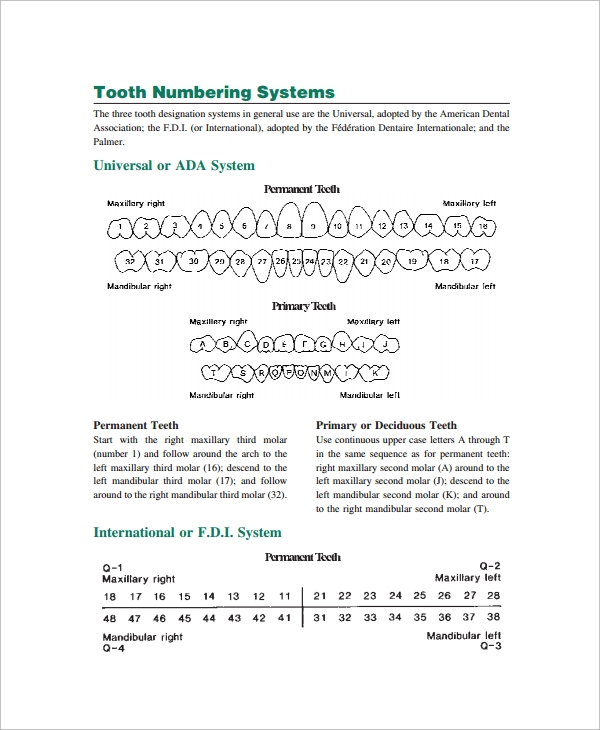 Sample teeth chart template 10 free documents download in pdf teeth numbers chart ccuart Images