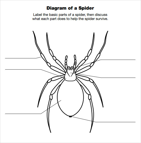13 Spider Diagram Templates To Download Sample Templates