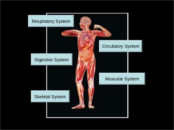 human body interactive ppt