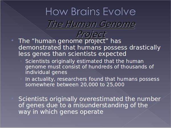 brain evolution powerpoint template