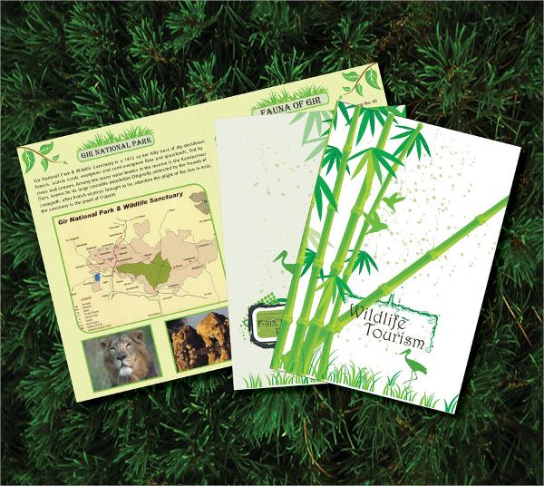 wild tourism brochure