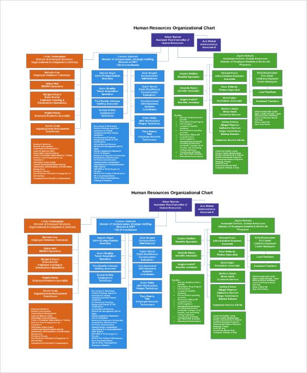 human resources employee organizational chart