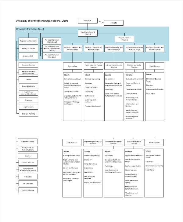university of birmingham organisational chart