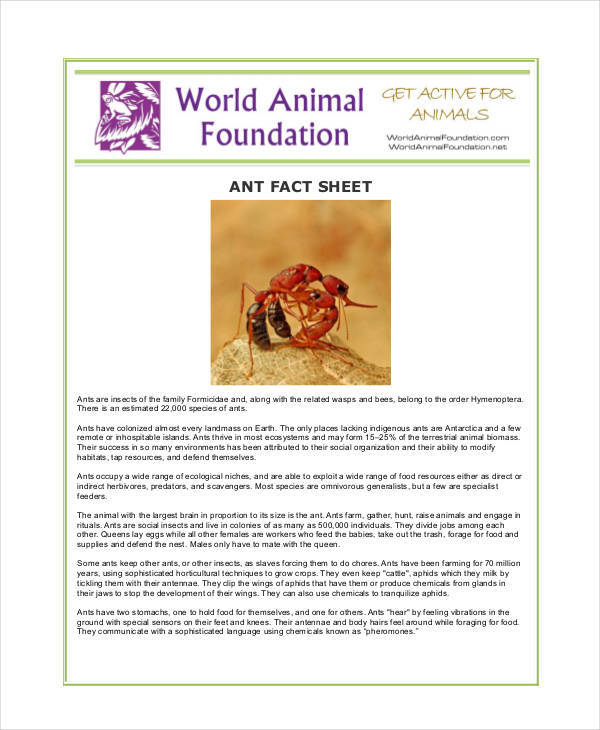army ant fact sheet1