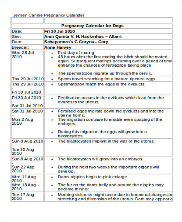 daily pregnancy calendar4