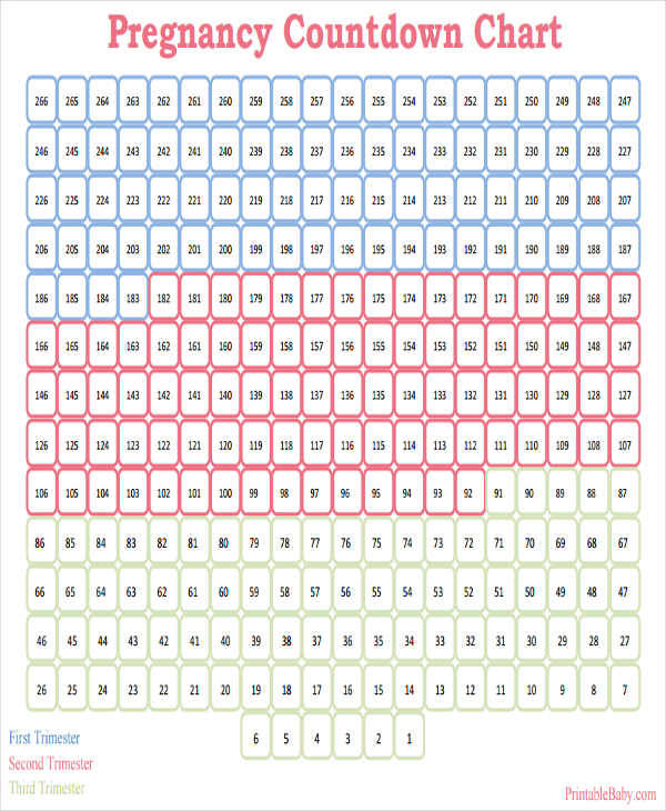 Countdown Calendar Template  Free Sample Example Format Download