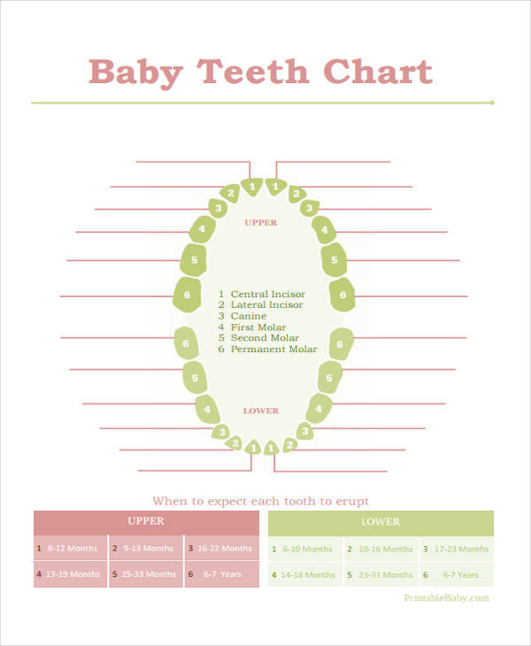 11 Baby Chart Template - Examples In Word, Pdf