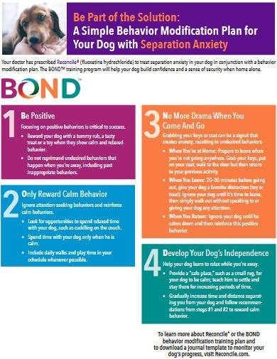 dog behavior modification plan